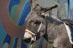 Donkey. Burro ruso en zoo de Nizhnij Novgorod Stock Image