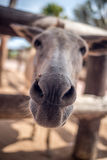 Donkey Business Royalty Free Stock Images