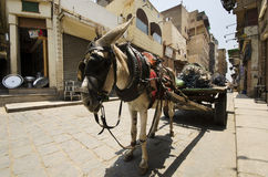 Donkey in Cairo. Donkey on the Cairo street Royalty Free Stock Photos