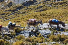 Caravan in Cordillera stock photo