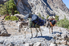 Donkey caravan in mountains of Tajikistan Royalty Free Stock Photos