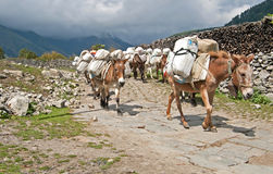 Donkey caravan in Nepal royalty free stock photography