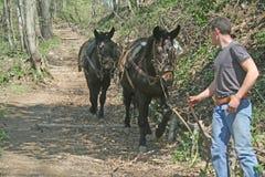 Donkey caravan Royalty Free Stock Photography