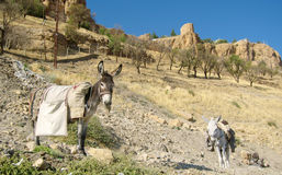 Donkey with cargo on his back in the mountains Royalty Free Stock Image