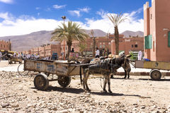 Donkey carriage in Morocco Stock Images