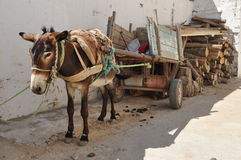 Donkey of carriage, suk in Tunisia Stock Images