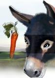 Donkey and carrot Royalty Free Stock Photos