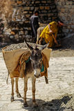 A donkey carrying gravel, Islamabad Pakistan. A donkey carrying gravel in Islamabad Pakistan Stock Photography