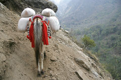Donkey carrying heavy loads, annapurna Royalty Free Stock Photos