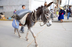Donkey Carrying Produce to the Market Royalty Free Stock Photos