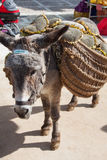 Donkey carrying a sunflower in chinchon near madrid. Royalty Free Stock Photos