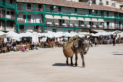 Donkey carrying a sunflower in chinchon near madrid. Royalty Free Stock Images