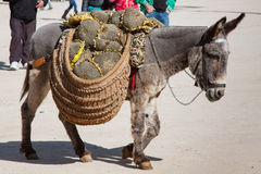 Donkey carrying a sunflower in chinchon near madrid. Royalty Free Stock Image