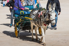 Donkey carrying a sunflower in chinchon near madrid. Royalty Free Stock Photography