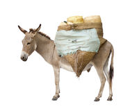 Donkey carrying supplies Stock Images