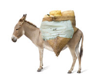 Donkey carrying supplies Stock Photos