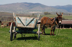 Donkey and cart Stock Images