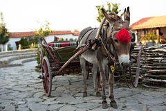 Donkey and cart Royalty Free Stock Images