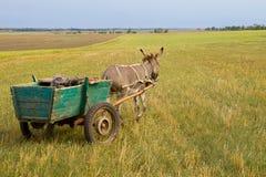 Donkey cart Royalty Free Stock Image