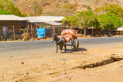 Donkey and the cart in Ethiopia Stock Photography