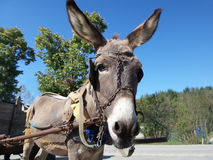 Donkey and cart Stock Photos