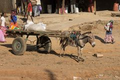 Donkey with a cart Royalty Free Stock Images