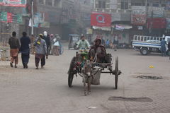 Donkey cart. Labour at hard work during early morning hours Royalty Free Stock Image