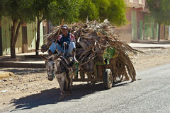 Donkey Cart. Man rides donkey cart filled with dryed palm leaves Royalty Free Stock Images