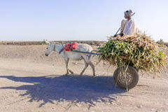 Donkey cart in Sudan Stock Images