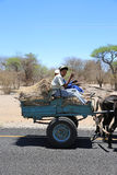 Donkey Cart Stock Images