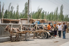 Donkey carts parking Royalty Free Stock Image