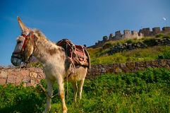 Donkey in castle royalty free stock image
