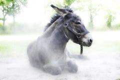 Donkey on the catwalk Royalty Free Stock Image