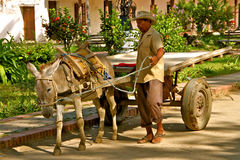 Donkey chariot, Mompos, Colombia Royalty Free Stock Photography