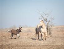 Donkey chasing horse Stock Photos