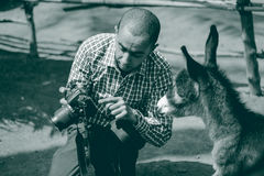 A donkey checking its photo stock photography