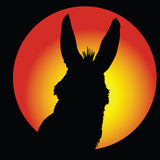 Donkey in circle with color background Royalty Free Stock Image