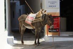 Donkey in city Stock Photos