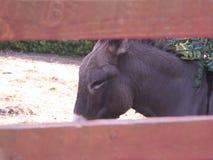 Donkey. Classic donkey farm in the resting phase Royalty Free Stock Photos