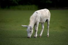 Donkey in a clearing stock photography