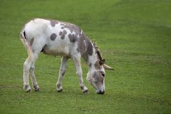 Donkey in a clearing stock images