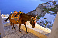 Donkey climbing staircase in Santorini Stock Photo