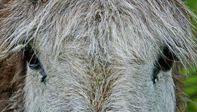 Donkey close-up Stock Photos