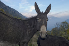 Donkey close up portrait Stock Photos