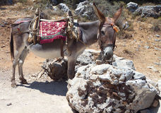 Donkey at Crete island, Greece Royalty Free Stock Images