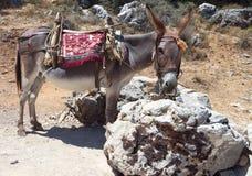 Donkey at Crete island, Greece royalty free stock images