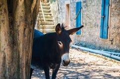 Donkey, Croatia, Home, Rural Royalty Free Stock Photography