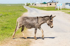 The donkey crosses the road Royalty Free Stock Images