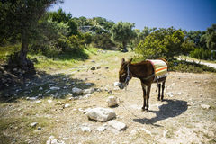 Donkey in Cyprus Stock Photography