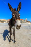 Donkey on Cyprus Stock Image